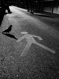 Darf die Taube das? von Dario Lauper