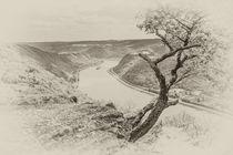 Krüppelbaum am Mittelrhein 43.6 - sw von Erhard Hess