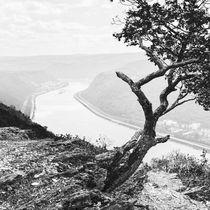 Krüppelbaum am Mittelrhein 43.15 - sw von Erhard Hess