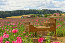 Bett im Mohnfeld von Astrid Steffens