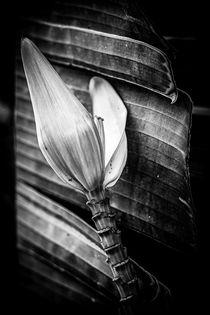Palmenblüte by Christine Bässler