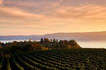 Blick über einen Weinhang auf den Bodensee by sven-fuchs-fotografie