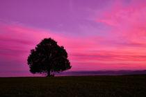 Silhouettenbaum auf dem Feld vor romantischem Himmel bei Sonnenuntergang von sven-fuchs-fotografie
