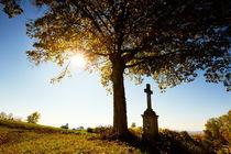 Kreuz unter einem Baum mit Herbstlaub bei Gegenlicht von sven-fuchs-fotografie