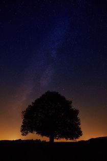 Sternenhimmel mit einzelnem Baum als Silhouette by sven-fuchs-fotografie