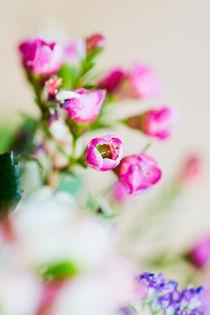 Rote Blüte mit schwacher Tiefenschärfe von sven-fuchs-fotografie