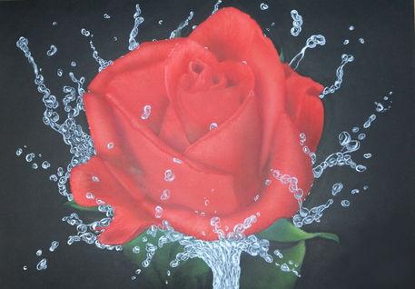 Rose-wassertropfen-airbrush-colorair-fineart-airbrush-nrw