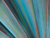 Yucca von Andrei Grigorev