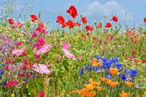 Blumenwiese bunt von Astrid Steffens