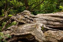 Schlosspark Herten 9 - Trompetenbaum Details von Petra Dreiling-Schewe