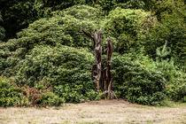 Schlosspark Herten 8 von Petra Dreiling-Schewe