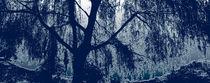 Willow in blue von feiermar