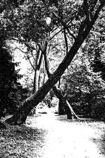 Schlosspark Herten 10.3  by Petra Dreiling-Schewe