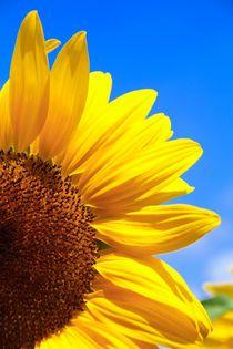 sunny flower von Ingrid Bienias