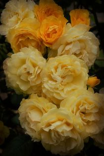 'Sunshine With Roses' von CHRISTINE LAKE