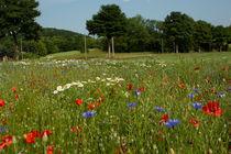 Blumenwiese im Erzgebirge von Stefan Weber