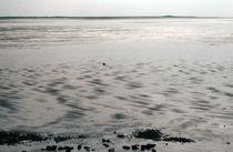 Sylt, Wadden Sea - 8 von Thomas Anton Stribick