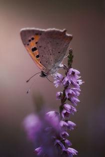 Schmetterling von Mike Ahrens