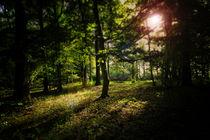 Lichteinfall by Jakob Wilden