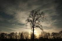 Baum im Gegenlicht by Jakob Wilden
