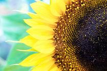 Sonnenblume von Steffan  Martens