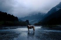 Haflinger Stute in einem nebeligem Tal von Cécile Zahorka