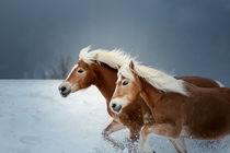 Haflinger im Schnee von Cécile Zahorka
