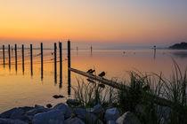 Kurz vor Sonnenaufgang auf der Halbinsel Höri - Bodensee by Christine Horn