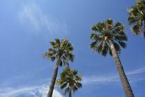 Himmlische Palmen von Claudia Evans
