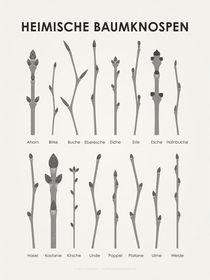 Baumknospen (3:4) von Iris Luckhaus