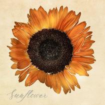 Sunflower by Peter Hebgen