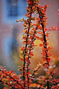 Herbstgeflüster... 3 von loewenherz-artwork