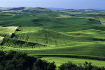 Rolling hills of green croplands from Steptoe Butte Eastern Washington State USA von Jim Corwin