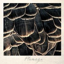 Plumage by Peter Hebgen