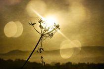 Früh auf dem Land by Claudia Evans
