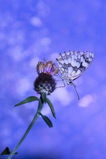 Zarte Schönheit by Claudia Evans