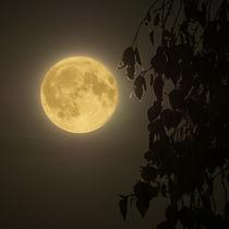 Mond vor dem Fenster von Christoph  Ebeling