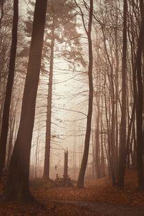 Düsterer Wald von Claudia Evans
