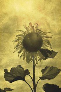 Sonnenblume  von Claudia Evans