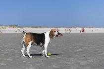 Urlaub auf Norderney / 7 von Heidi Bollich