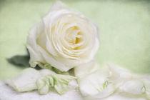 Rosen für Dich von Heidi Bollich