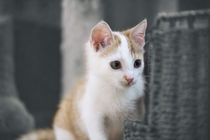 Kleine Katze / 4 von Heidi Bollich