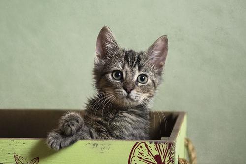 Dsc-7855-dot-af-kitten1-08-19