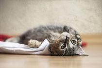 Kleine Katze / 3 von Heidi Bollich