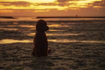 Ein Tag am Strand / 12 von Heidi Bollich
