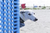 Ein Tag am Strand / 15 von Heidi Bollich