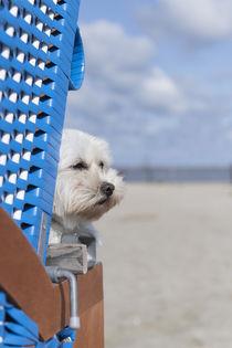 Ein Tag am Strand / 18 von Heidi Bollich