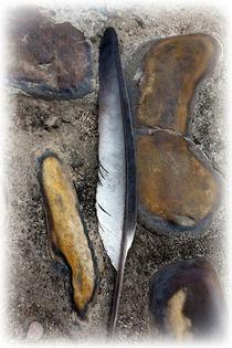 A fallen feather by feiermar