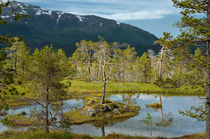 Ånderdalen-Nationalpark by Iris Heuer