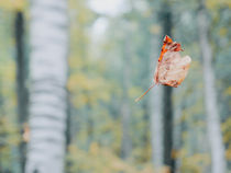 Levitation  by Andrei Grigorev